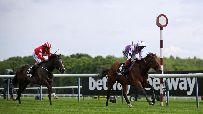There's an exciting day of Flat racing ahead at Haydock
