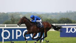 Adayar remains in contention for the Champion Stakes at Ascot