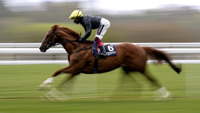 Stradivarius is  in 'good order' for the Goodwood Cup, according to trainer John Gosden