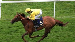 Addeybb is looking to become a two-time Champion Stakes winner on Saturday