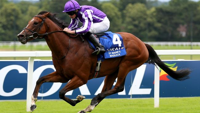 St Mark's Basilica's next run looks set to come on the Knavesmire